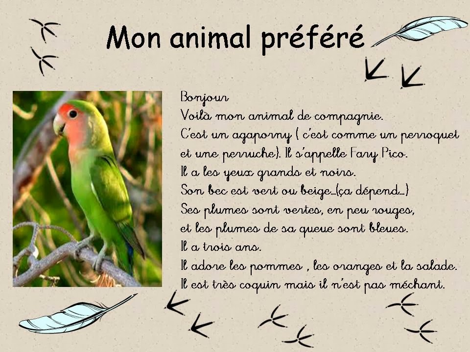 description d un animal en anglais