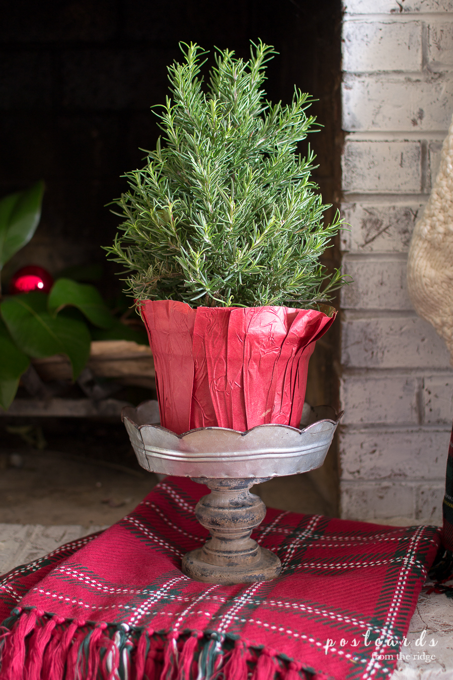 rosemary topiary on pedestal and plaid blanket