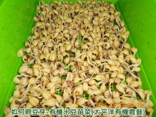 米豆,黑眼豆副食品,米豆副食品,眉豆功效,米豆泥,米豆便當,米豆哪裡買台中,米豆營養成分,米豆好處,米豆是什麼