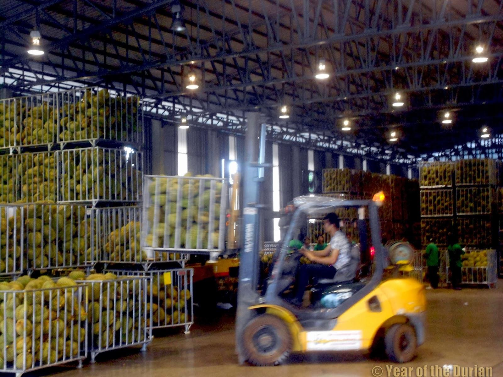 Sunshine Durian Factory -