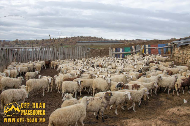 Sheep farm near #Chanishte village, #Mariovo region, #Macedonia