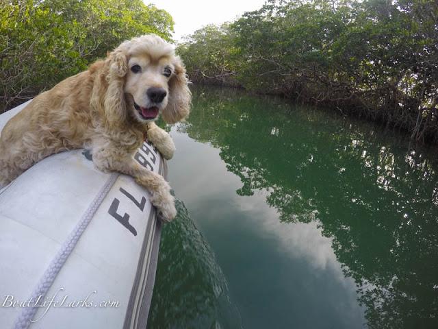 Hastings enjoying exploring the mangroves in Key Largo
