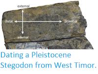 http://sciencythoughts.blogspot.co.uk/2016/03/dating-pleistocene-stegodon-from-west.html