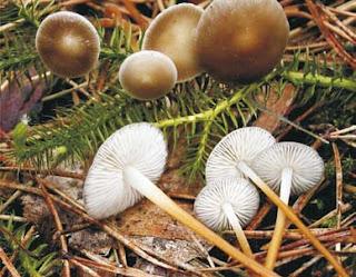 Σύγχρονες κατευθύνσεις στην οικολογική φυτοπαθολογία