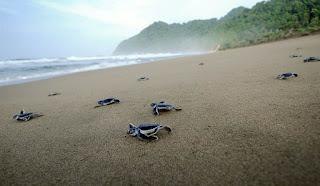 Sukamade Tutle Beach, Banyuwangi Java Island Indonesia