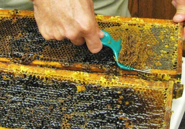 Το μυστικό για να δώσουν οι ανθοφορίες πολύ μέλι: Και όμως όλα ξεκινούν απο το Χειμώνα!