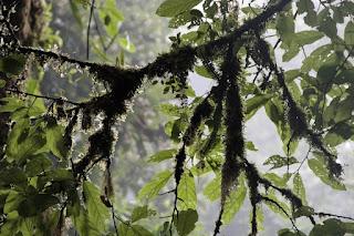 unberührtes Ökosystem Costa Rica
