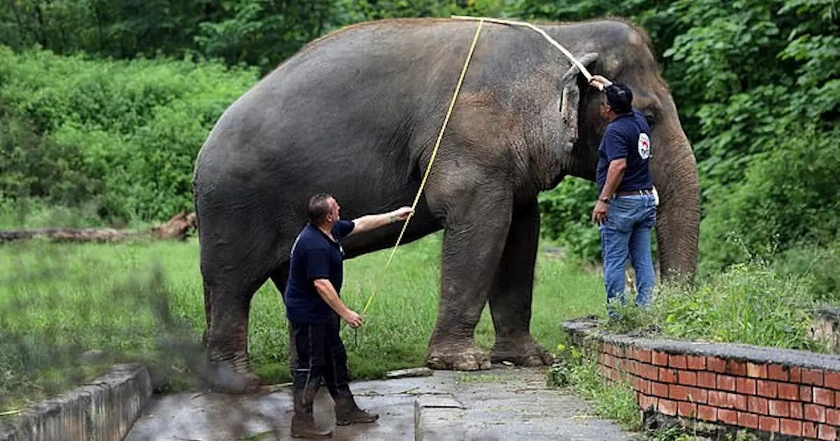 The 'World's Loneliest Elephant' To Be Freed After 35 Years Of Captivity In A Pakistan Zoo