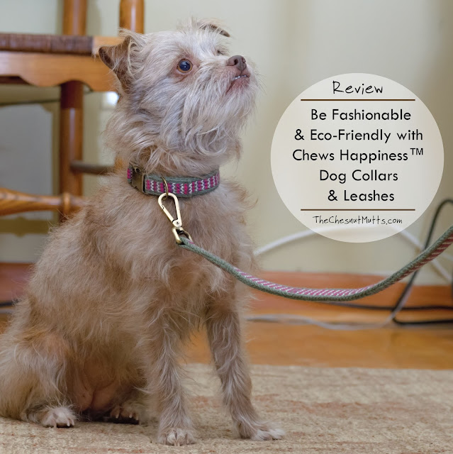 Be Fashionable & Eco-Friendly with Chews Happiness™ Dog Collars & Leashes