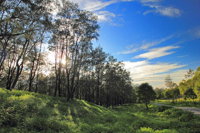 Hutan Fatu Nausus