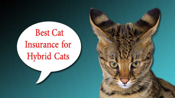 Best Cat Insurance for Hybrid Cats