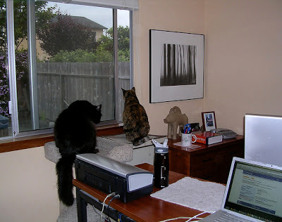 Jeri Dansky's home office, with cats