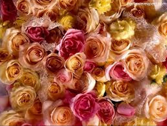 Flower-rose-Wallpaper