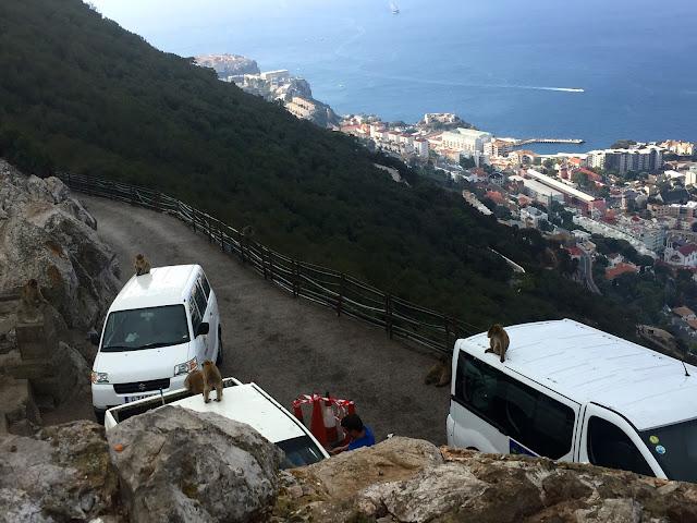 Magoty Gibraltar
