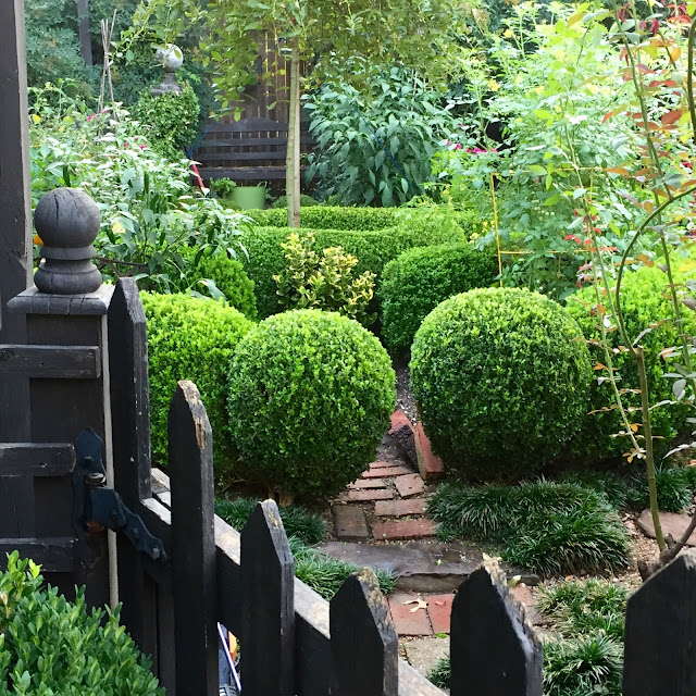 boxwood balls and clipped edging form the enclosure of the potager