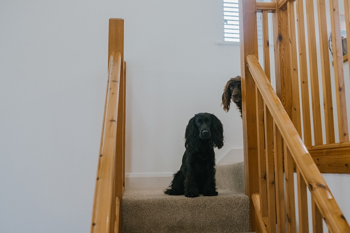 Dog Friendly Luxury Holiday to The Valley Cornwall
