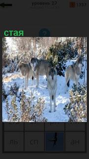 в зимнее время в лесу находится стая волков