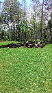 Rumput gajah mini rumah sakit RIZANI paiton Probolinggo beli dari lahan kita