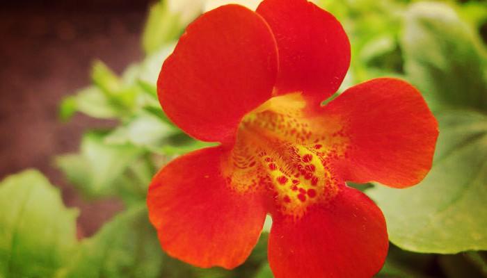 Flor de exterior al sol