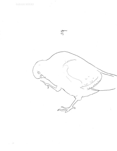 art, drawing, arte, pigeon, dove, sarah, myers, bird, sketch, minimal, line, contemporary, simple, modern, animal, charcoal, line-drawing, scratching, feet, typical
