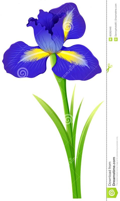 Iris Flower | Top Wallpapers