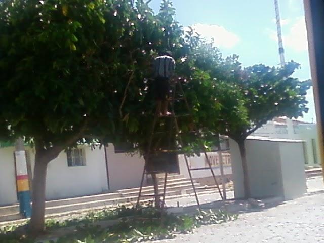 Prefeitura Inicia trabalho de poda de arvores na cidade de Amparo