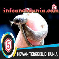 http://www.infoanehdunia.com/2017/07/5-hewan-paling-kecil-di-dunia.html
