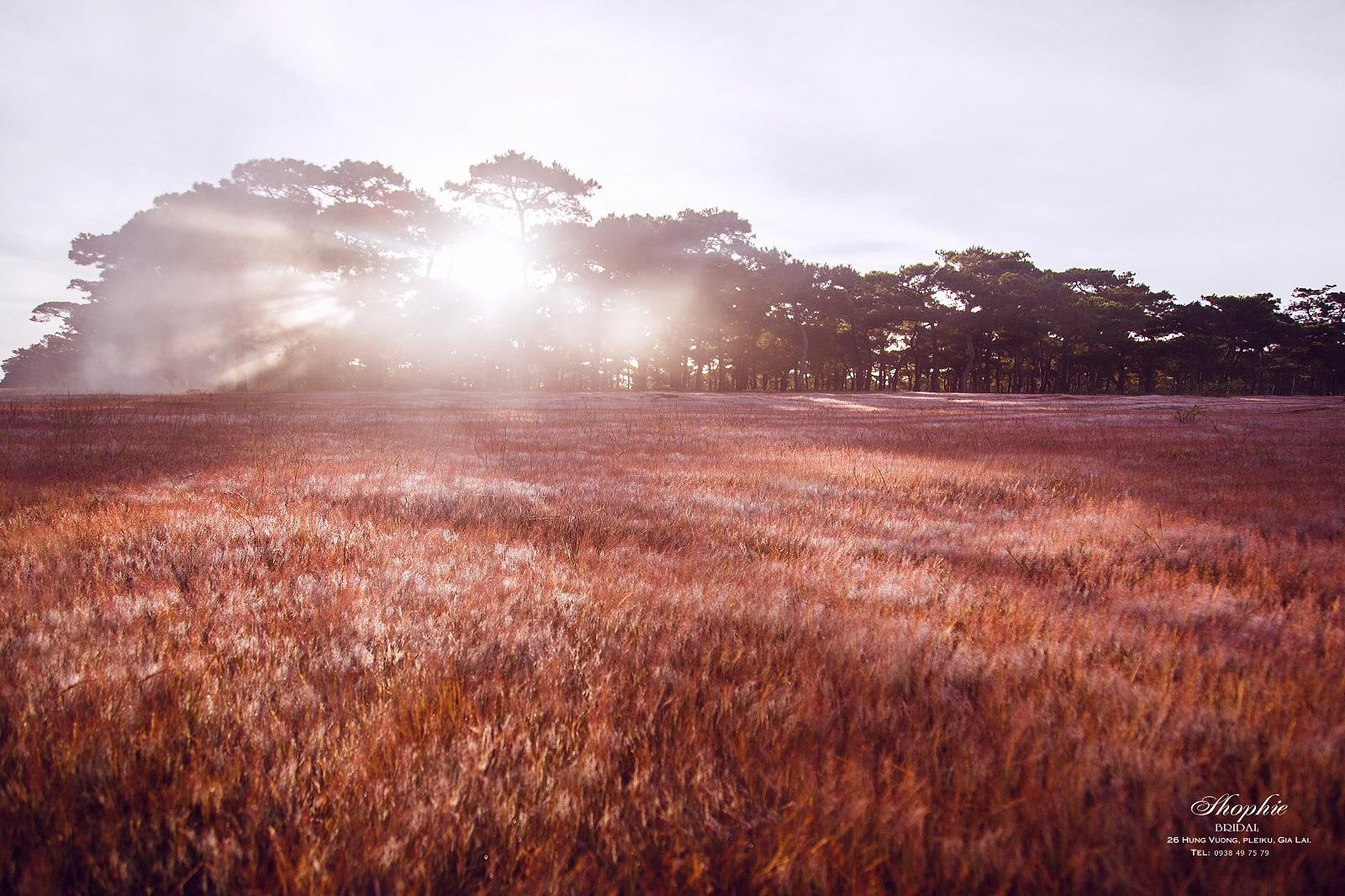 """Đồi cỏ hồng Gia Lai """"đẹp đến ngỡ ngàng"""" những ngày đầu đông"""