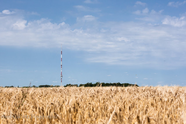 Szentes előtt egy rádió torony búzamezővel