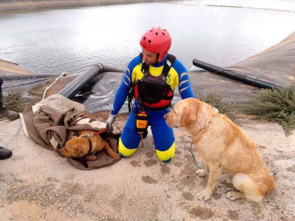 Bomberos del Parque de Arinaga rescatan a varios perros caídos en un estanque en santa lucía, vecindario