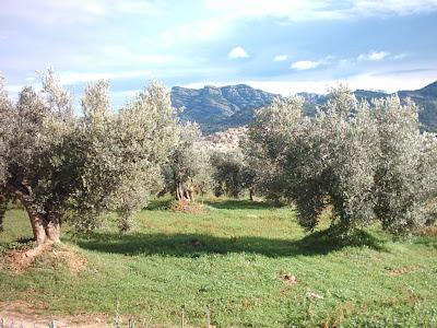 los olivares ,camino ,pantano de Pena, roca de migdia, Beceite, Beseit