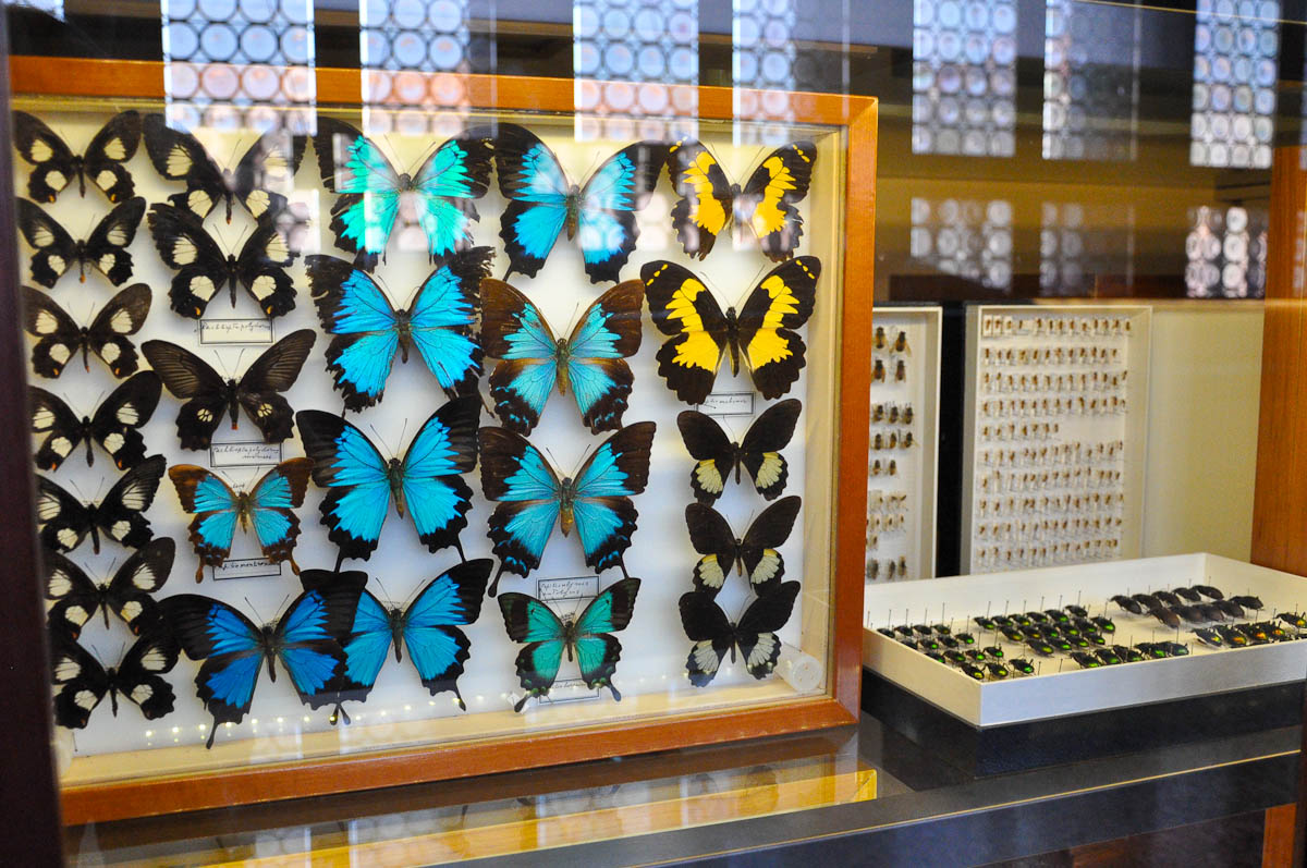 A collection of butterflies and beetles, Natural History Museum, Venice, Italy