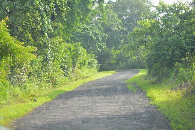Kondisi jalan menuju Pantai Balanan Situbondo