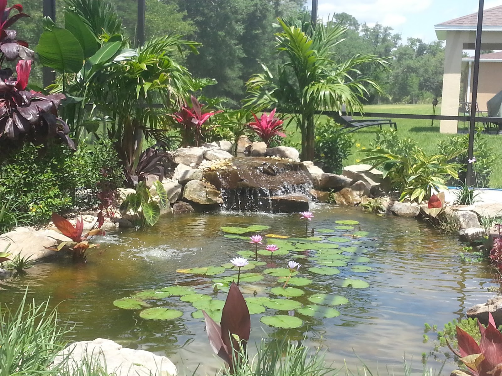 Jim 39 s pond what is your view for Garden pool ecosystem
