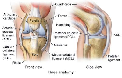 5 Jenis Cedera Lutut Yang Paling Sering Dialami Tecawc