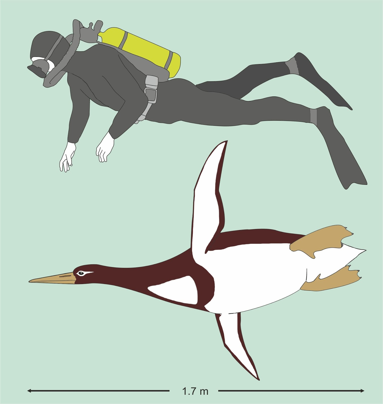 Fossil bones of human-sized penguin found on New Zealand beach