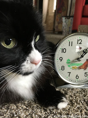 Maggie the cat posing with a clock