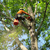 The Need for Expert Tree Care Advice