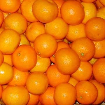 Chinese Food Mandarin Florida