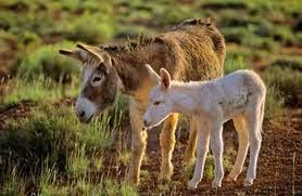 keledai, pelajaran dari keledai