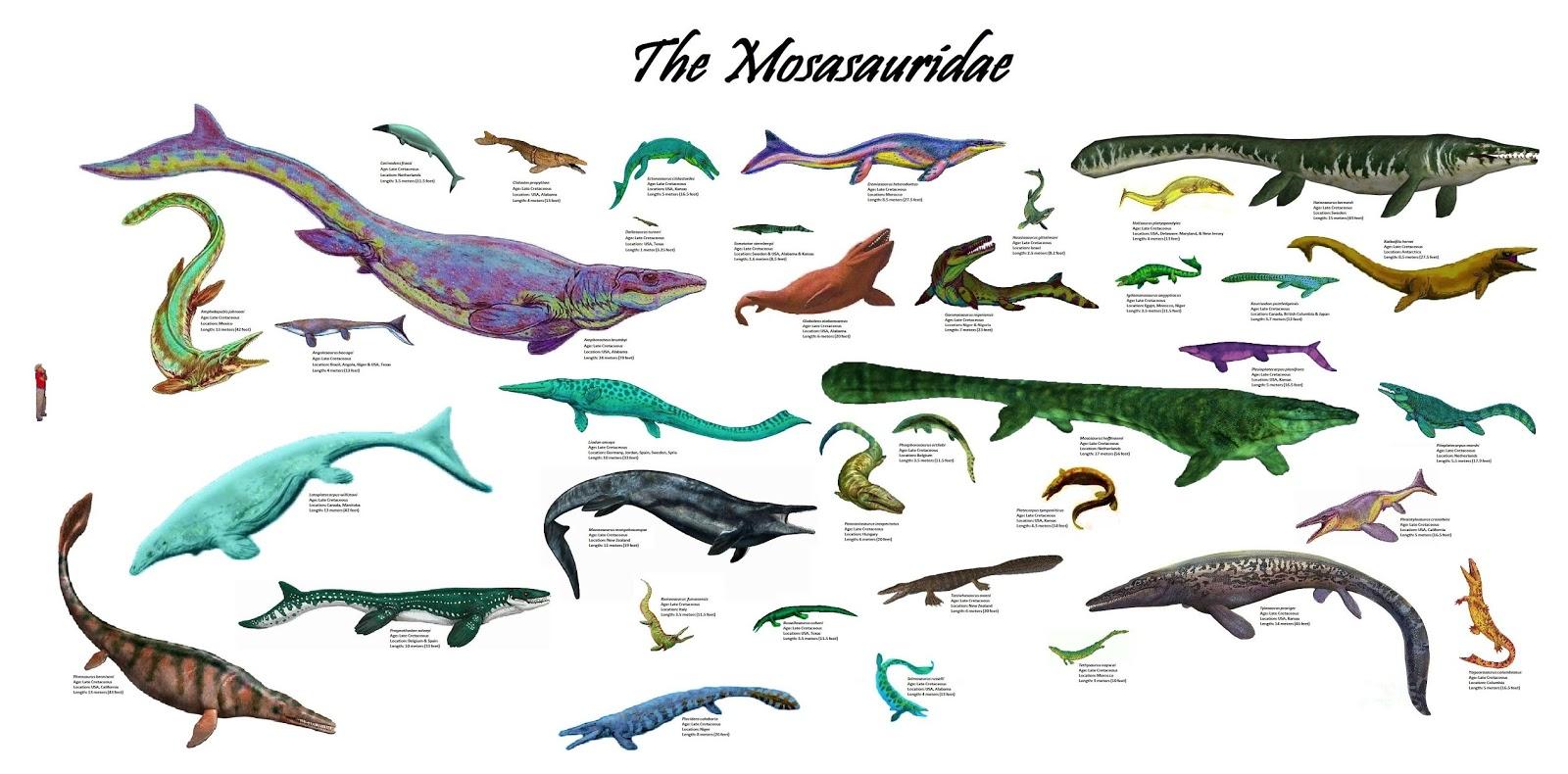 Familia Mosasauridae