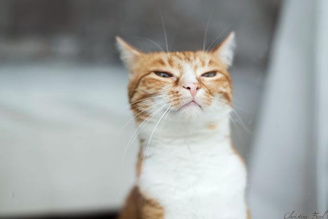 Hauskatzen-Tierschutz-Katzen-Fotografie