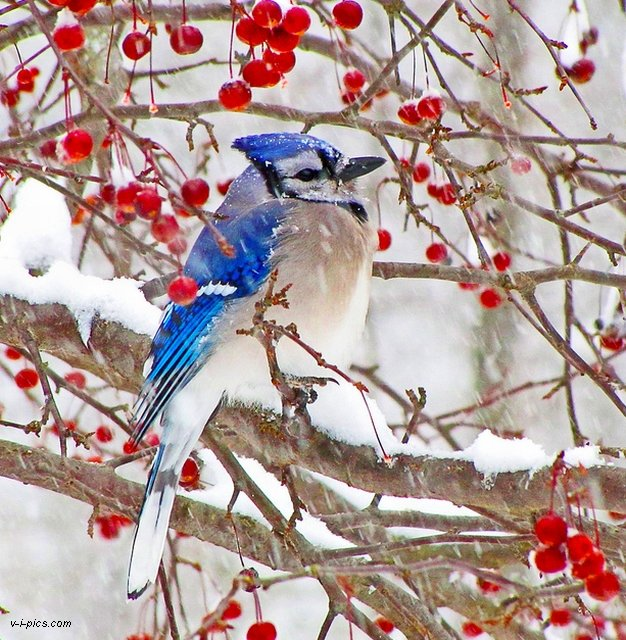 VINE IARNA???? Winter005791vipics