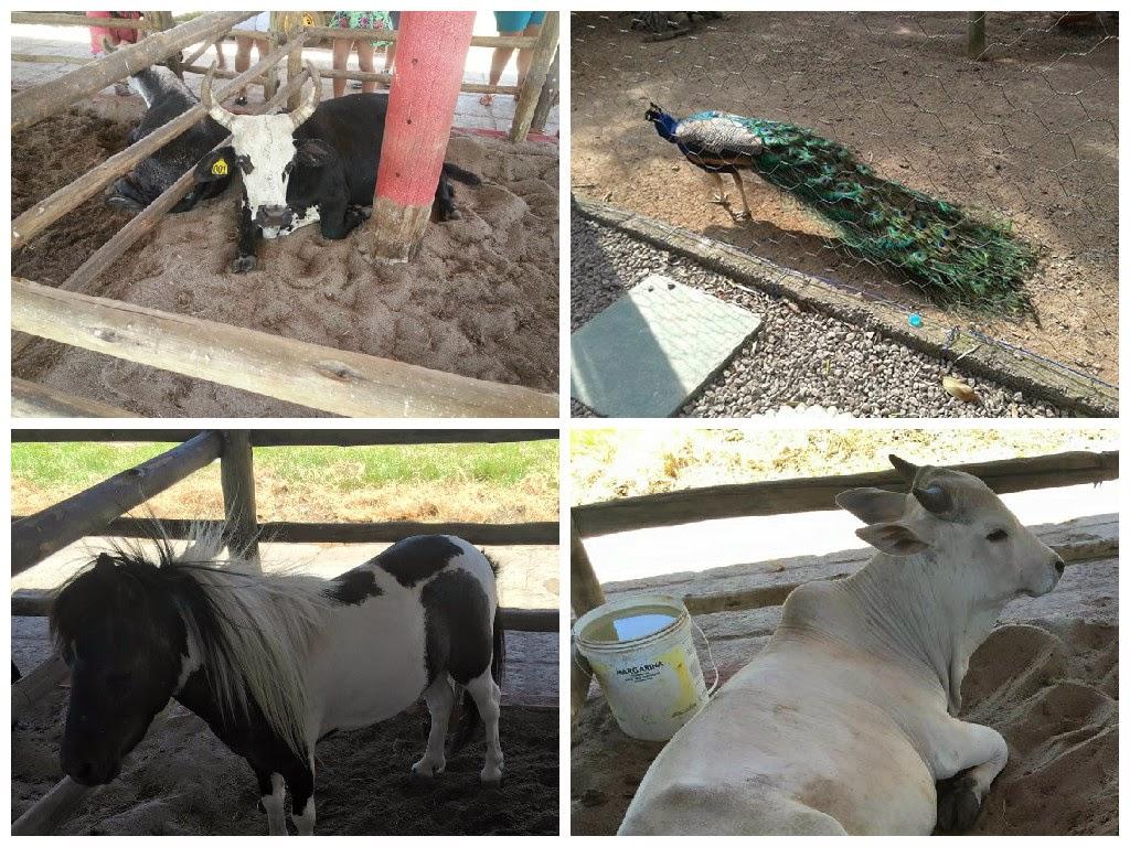 Animais Fazenda Rico Caipira