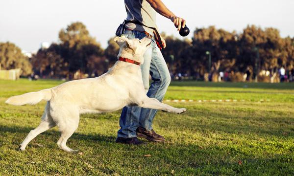 """So sánh """"chuẩn từng cm"""" giữa người nuôi chó và người nuôi mèo"""