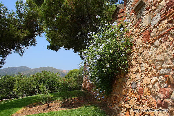 Old castle wall with cape plumbago