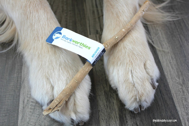 healthy ways to keep your dogs teeth and gums clean