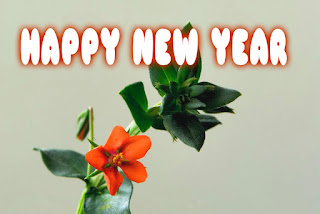 happy new year images nature