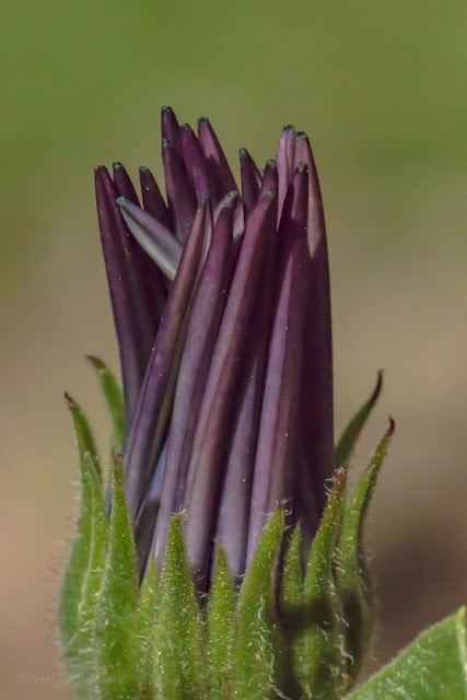 Close-Up Photography: Testing the Canon 500D 77mm Close-Up Lens Filter