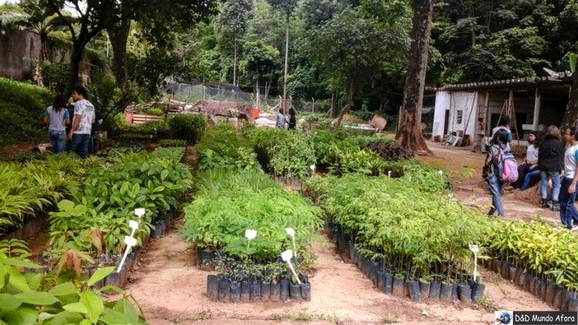 Plantas medicinais do Museu de História Natural da UFMG - Belo Horizonte